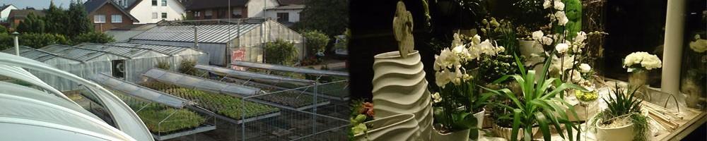 Blumenfachgeschäft Pütz-Kurth